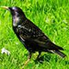 Hidden Emeralds: Birds