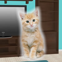 Kitten Room Escape