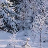 Winter Forest Escape 1
