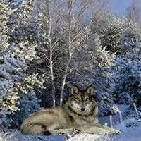 Winter Forest Escape 3