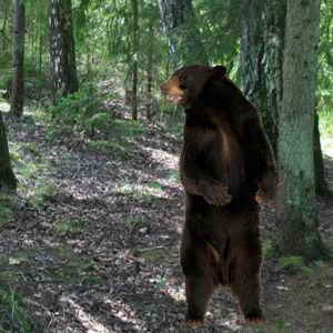 Alsunga Forest Adventure 2