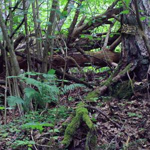 Alsunga Forest Adventure
