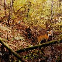 Autumn Forest Escape