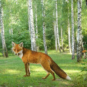 Enchanted Fox Forest Escape