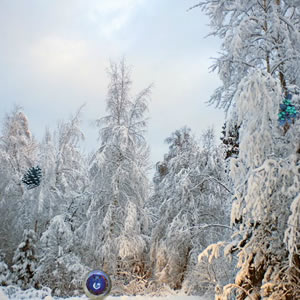 Frozen Snow Forest Escape