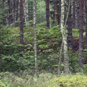 Mysterious Password Forest Escape 2