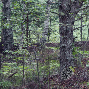 Mysterious Password Forest Escape
