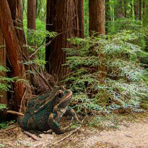 Sequoia Forest Adventure