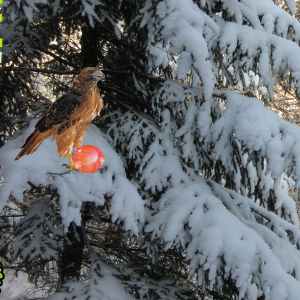 Winter Wonderland Forest Escape 2